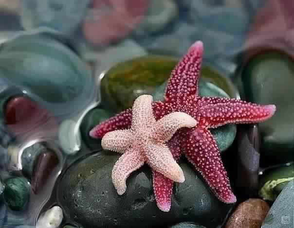10 изумительных фактов о морских звездах