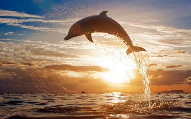 23 курьёзных факта о дельфинах, животных, которых в Индии признали личностями