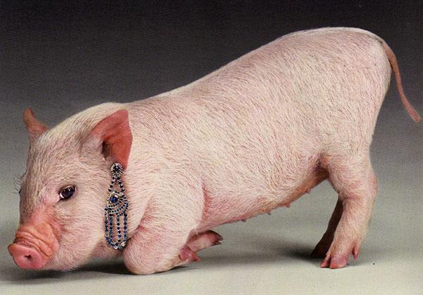 """""""Подложить свинью. Точить лясы""""... Происхождение выражений"""