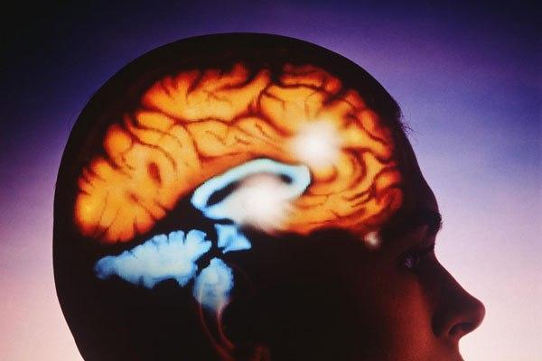 Интересные факты о работе памяти и мозга