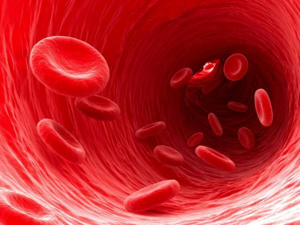 10 фактов про кровь