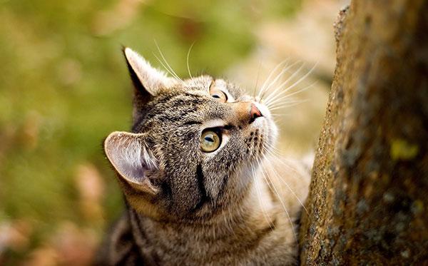 Факты о кошачьих рекордах