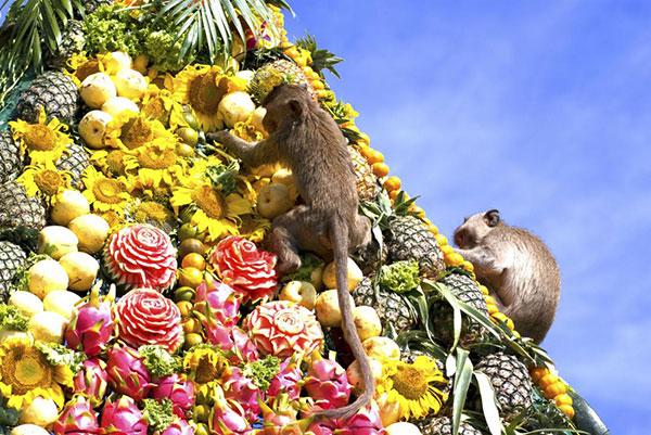 Необычные фестивали, посвященные животным