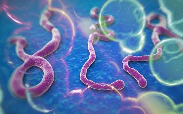 Самые опасные болезни в истории