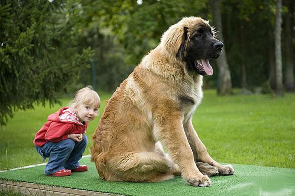 Самые крупные породы собак