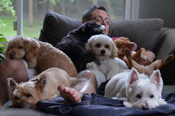 Обоснованные причины, почему стоит завести собаку