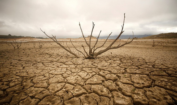 Опустынивание и засуха 0
