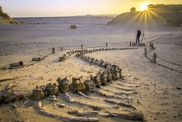Тайны пустыни Сахары 0